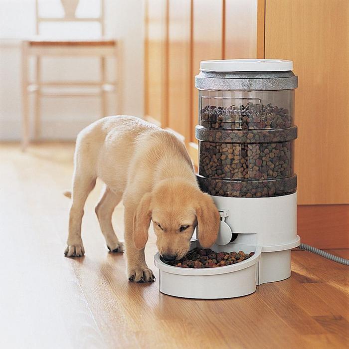 El mejor comedero para perro comparativa gu a de compra for Comederos para perros