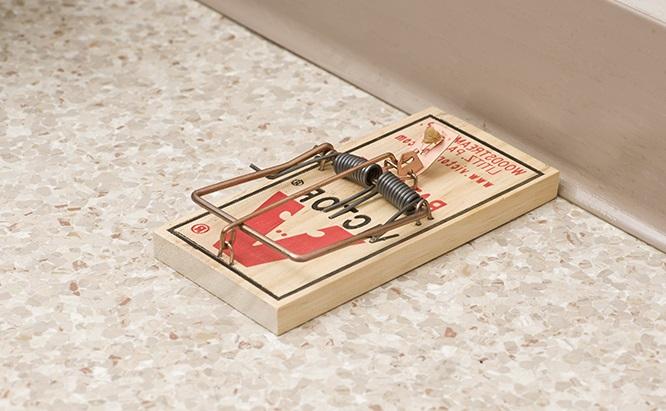 Cepos para ratas estaciones para control de roedores las - Cepos para ratones ...